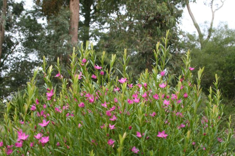 Winter flowers 013